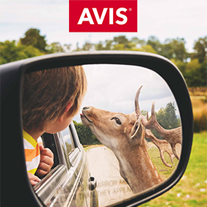 Earn 500 Miles per rental with Avis